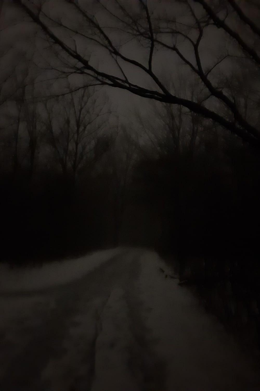 Experimental Farm pathway (trust me, it's a shortcut!), Ottawa, November 2020
