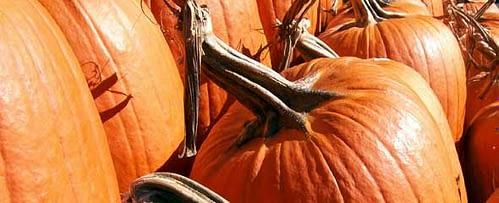 Pumpkins At The Byward Market